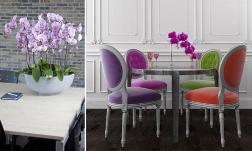 interior-flowers