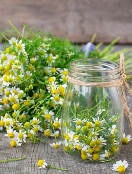 chamomile-in-jar