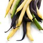 Grow dwarf beans