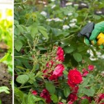 Homemade garden fertiliser recipes