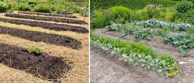 No-dig-garden