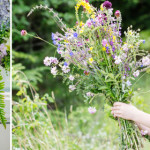 Grow your own cut flowers – it's easy!