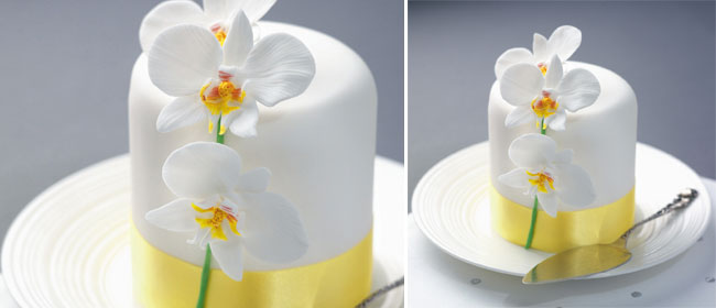 moth-orchid-cake