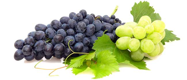 Grow-better-grapes