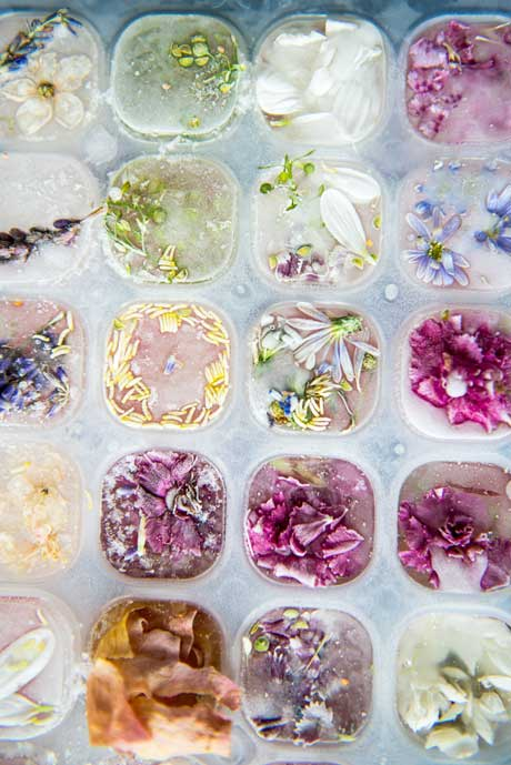 floral-ice-cubes1