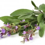 Sore throat? Gargle with sage