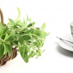 Cut down on sugar – grow stevia